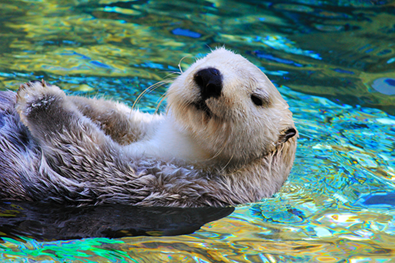 news: Otter.png