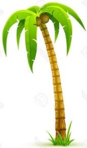 news: Palmboom-Rechts.jpg